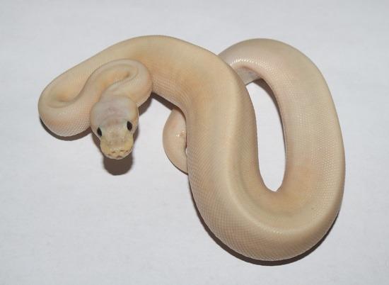 Banana Pinstripe Pastel Cinnamon